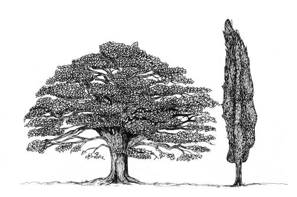 oakcypress